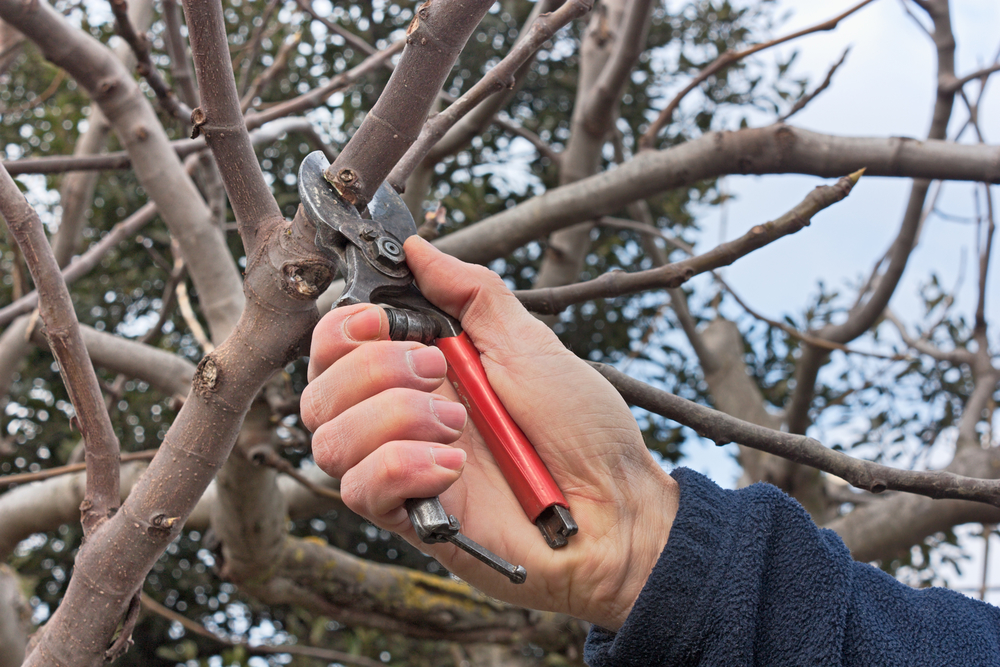 tree-cutting-service-West Hartford-CT