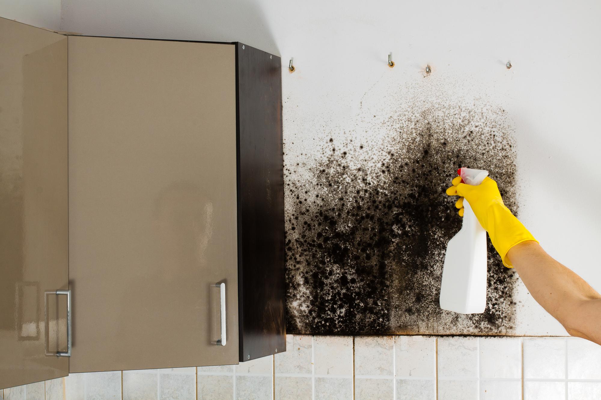 mold remediation La Crosse WI