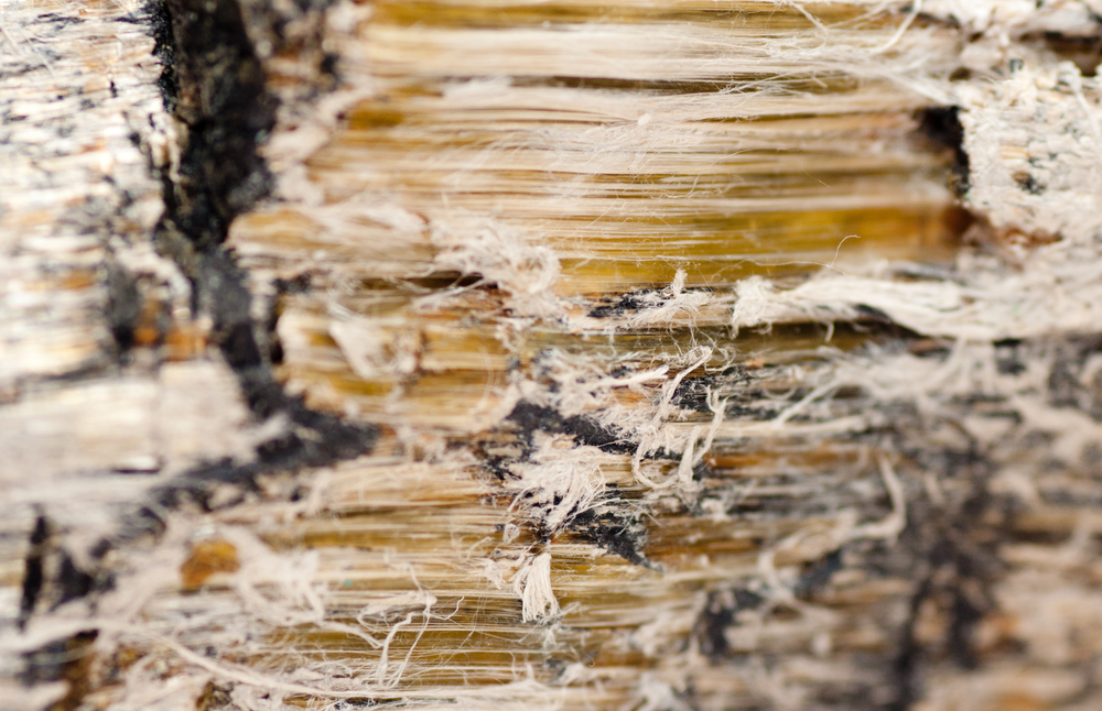 Can You See Asbestos Fibers : Asbestos removal experts share signs of in your