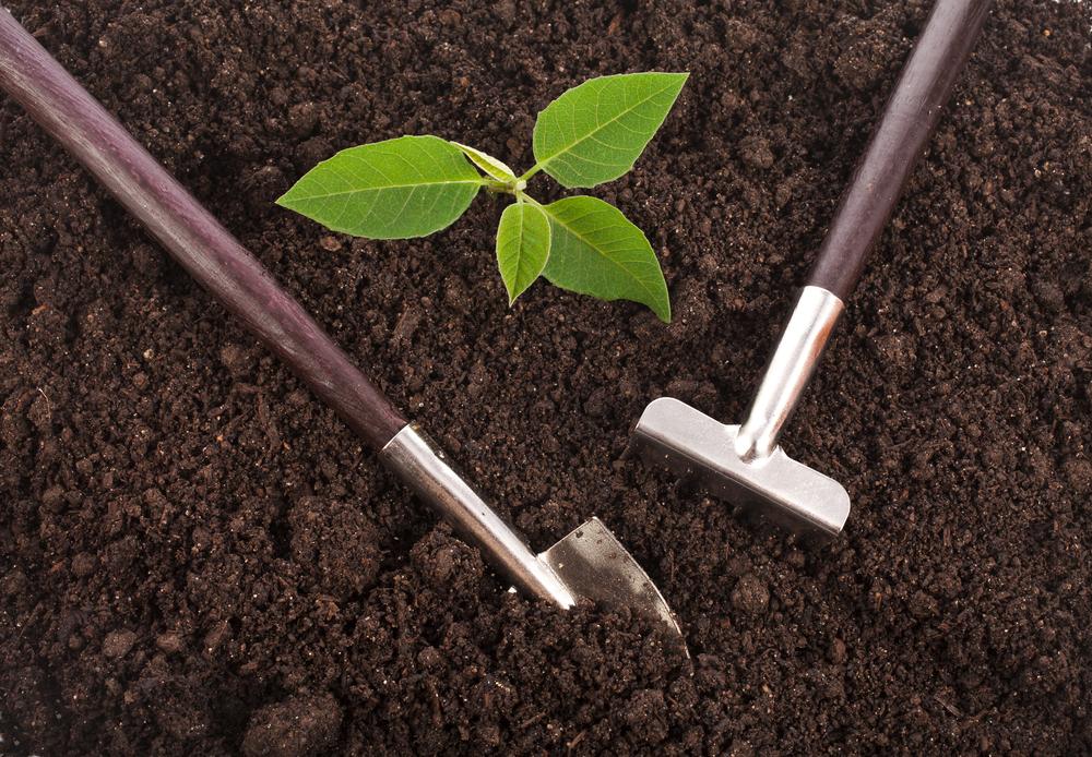 5 money saving gardening tips grow your own denver nearsay - Money saving tips in gardening ...