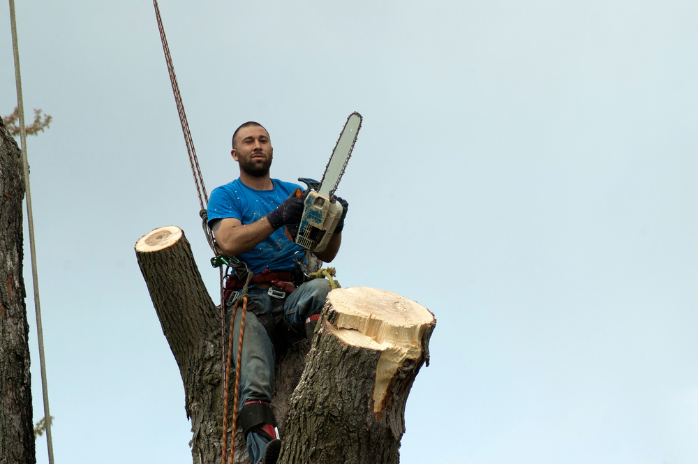 Commercial Tree Services West Hartford CT