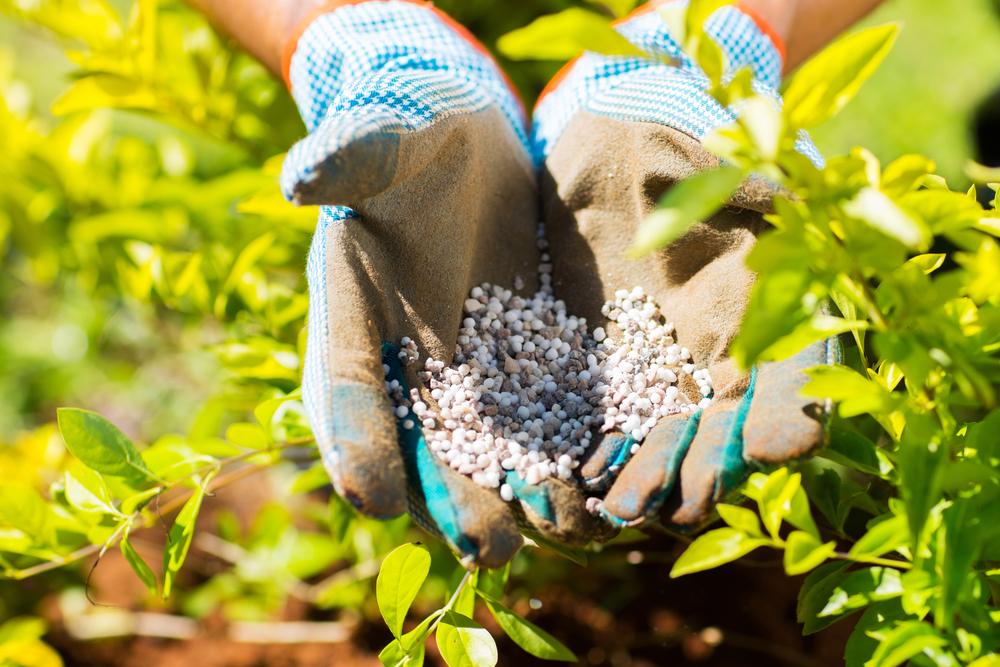 landscaping Blairsville GA