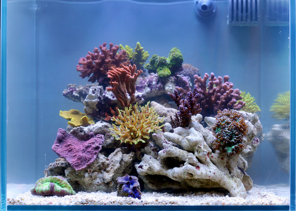 Stellar, simple soft coral and LPS tank is a masterpiece ...