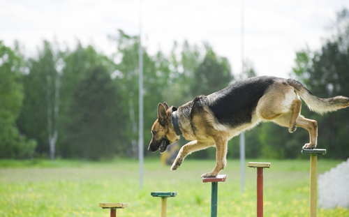 Defiance-Missouri-dog-training (2)