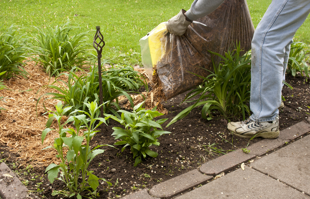The Lifespan Of Garden Mulch Can Vary Based On Your Watering Schedule And  The Type Of Mulch You Choose. Bark Mulch And Wood Chips Are The Two Most  Common ...