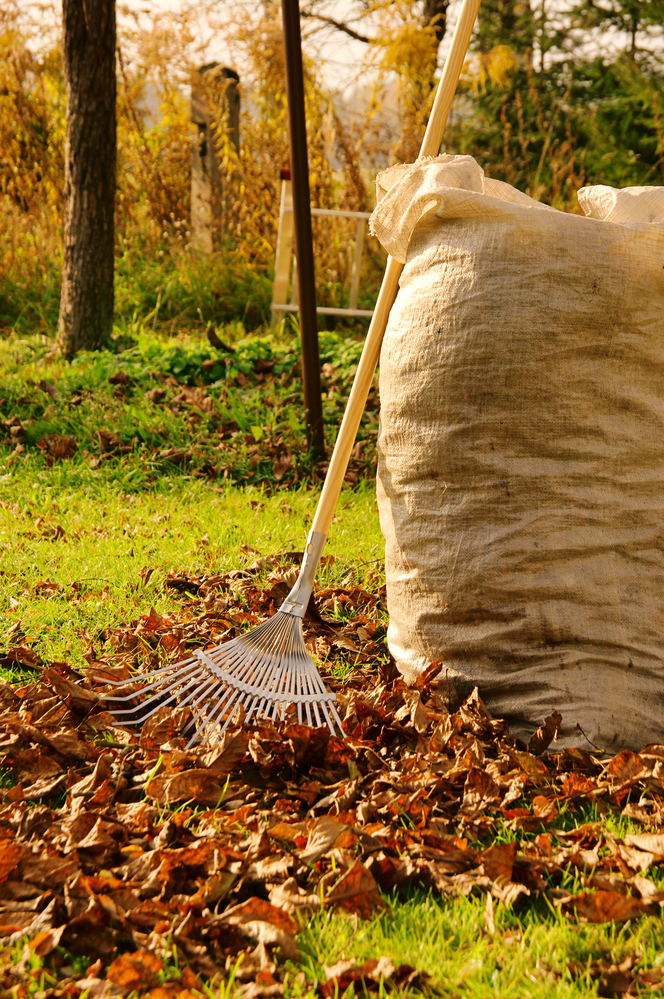 If those items build up on your lawn, they can prevent growth by hindering  drainage, and they may even result in fungus.