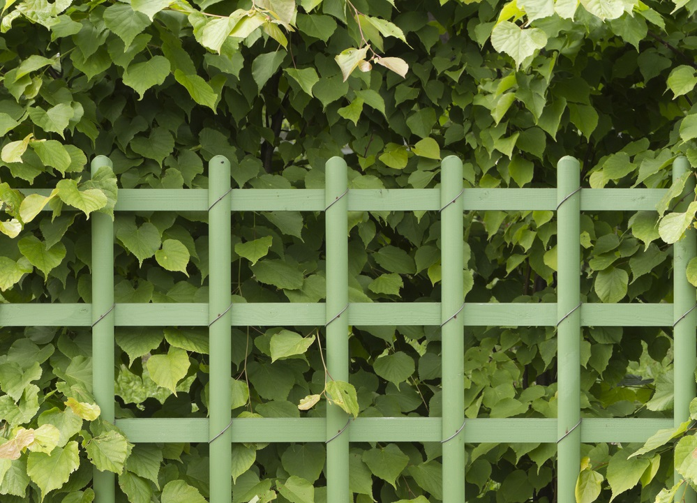 stop dog escaping through hedge