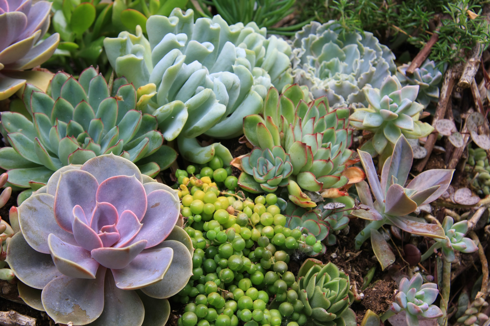 New Haven Plants
