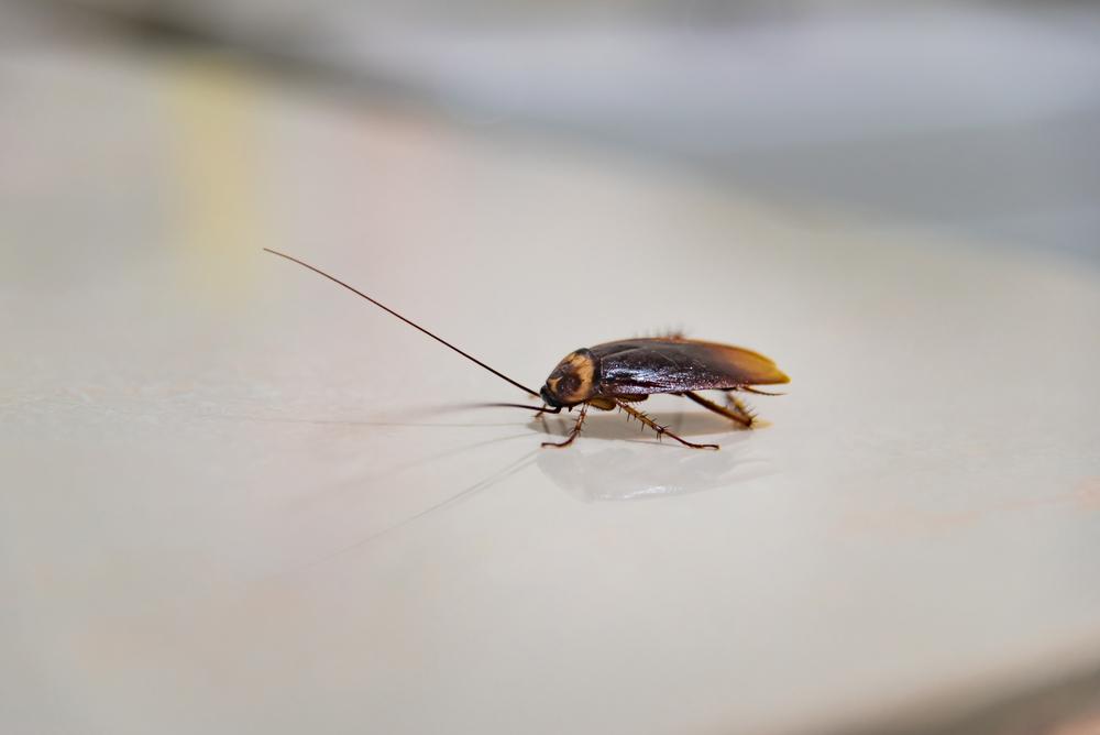 roach control service