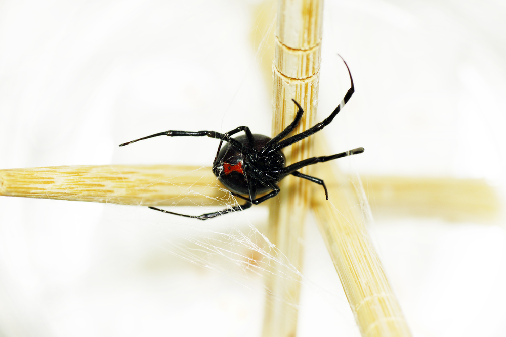 Pest Control Expert Lists Household Spiders in Alabama
