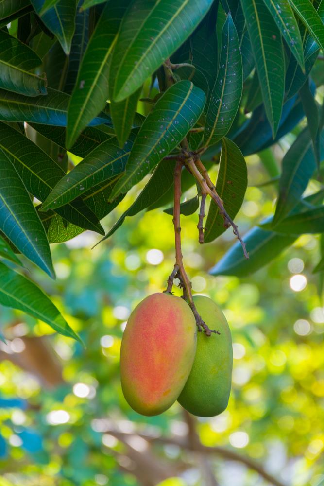 Understand Your Climate Gardening