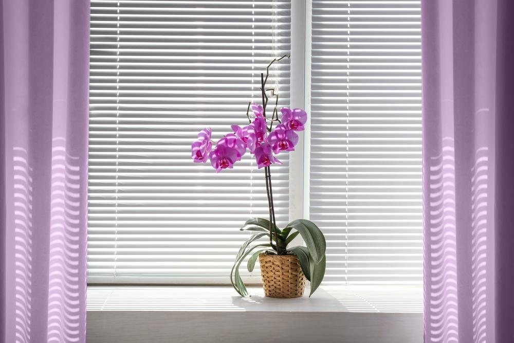 Light Sufficiently. Garden Store