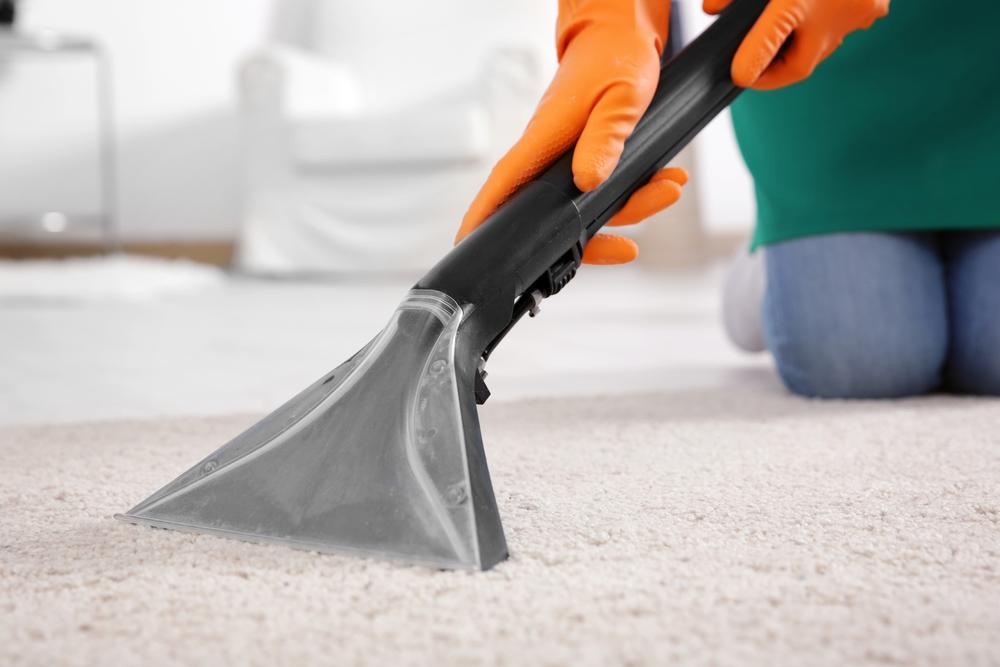 3 Best Carpets For Pet Owners Diamond Carpet Textile Services