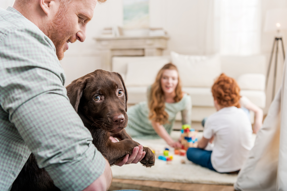 3 Animal Care Questions to Ask Yourself Before Getting a Pet - TLC