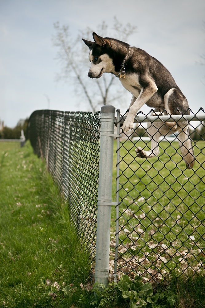 3 Tips To Keep Your Pet Inside Your Fence Security Fence