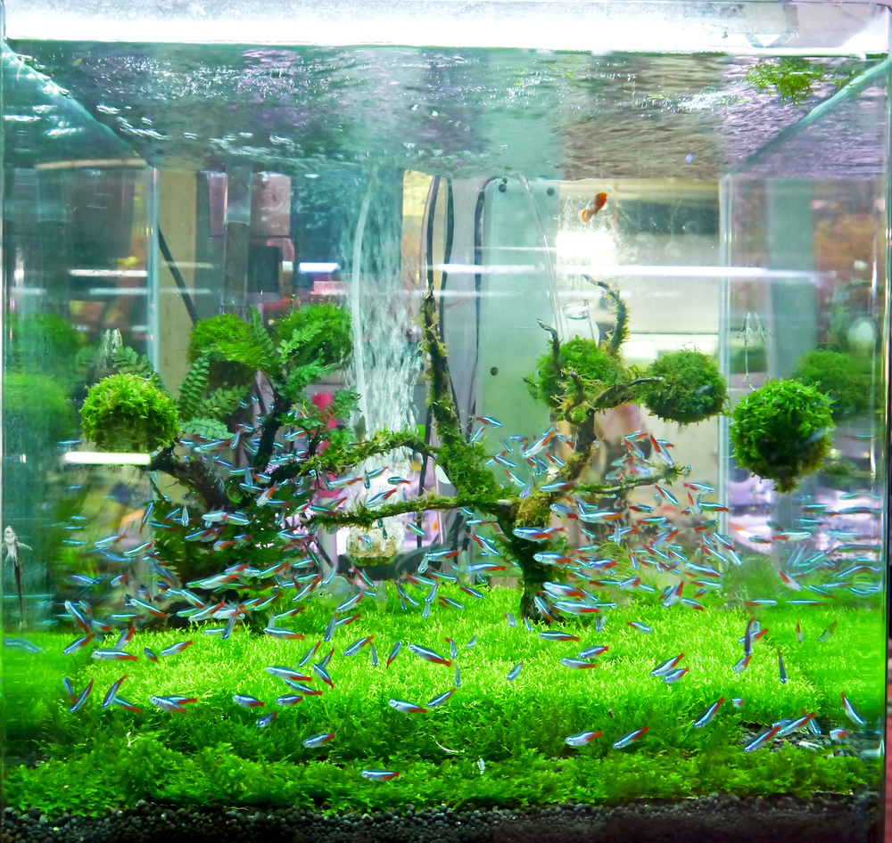 Freshwater fish tank upkeep - Crowding The Aquarium
