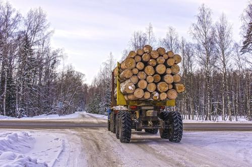 lumber buyers