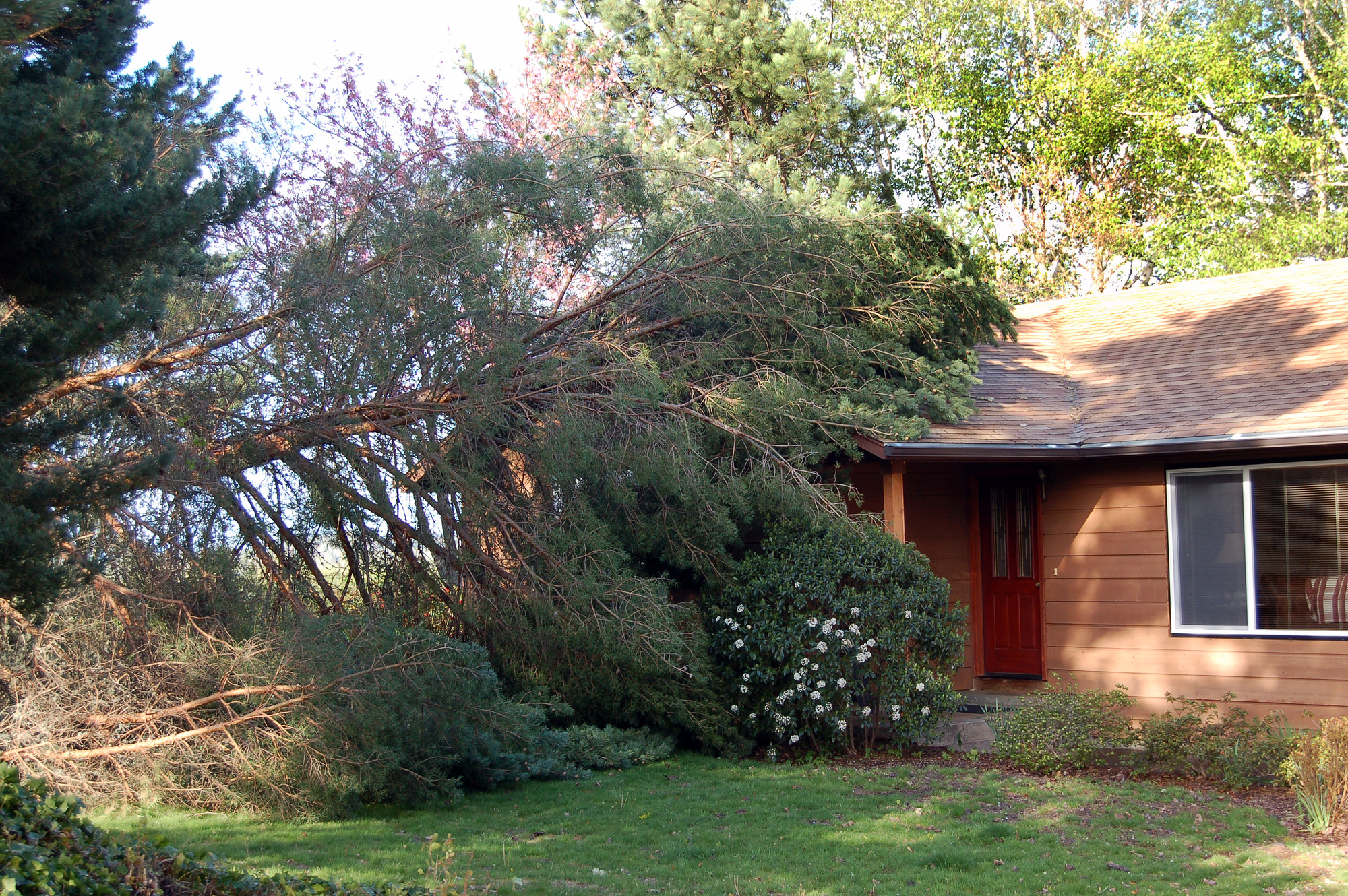 3 Reasons to Schedule Tree Removal for a Dead Tree - Mike's