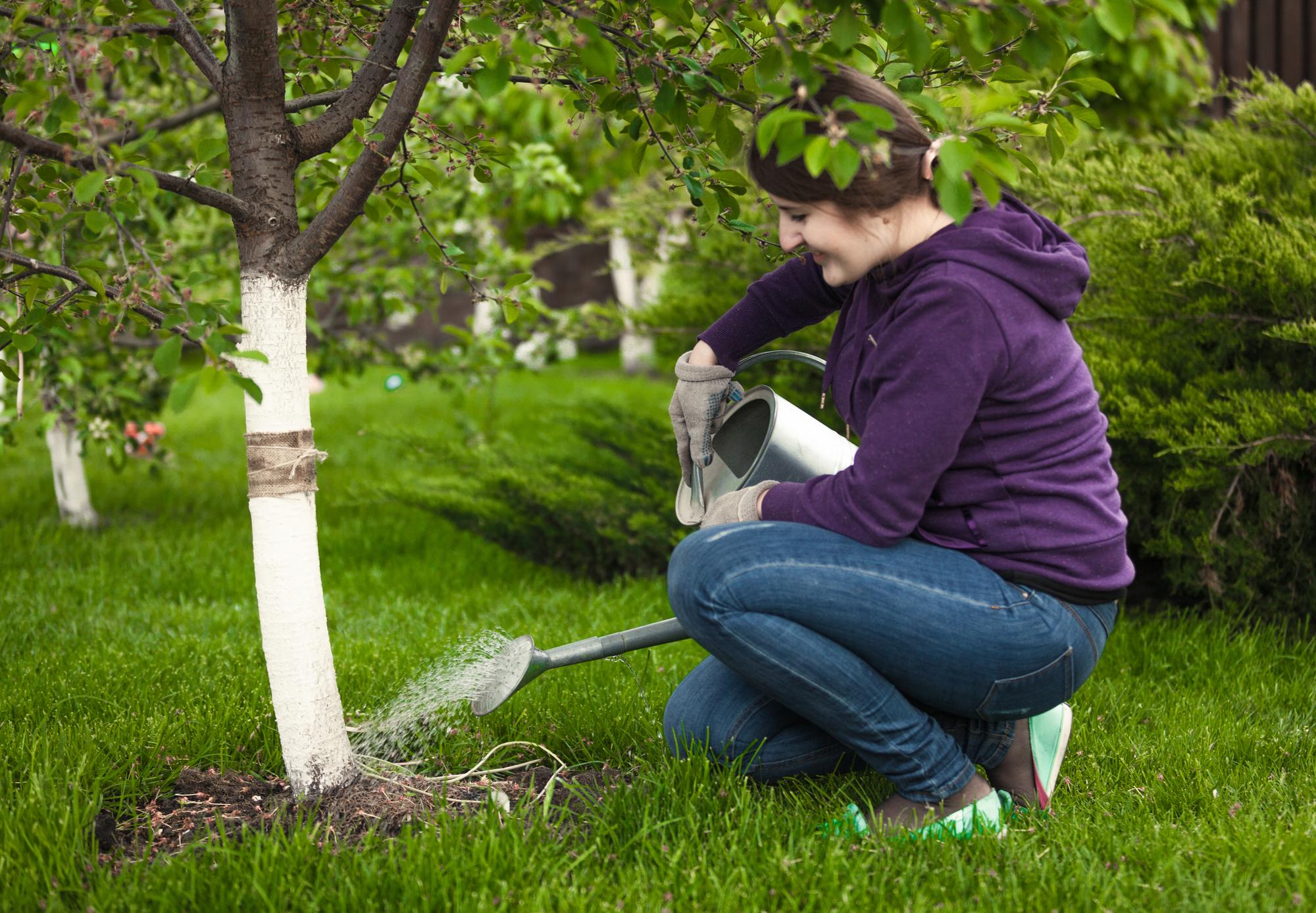 professional tree service