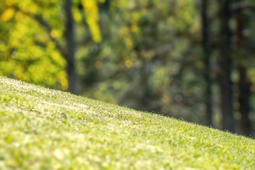 3 Yard Drainage Solutions You Shouldn't Postpone - Columbia