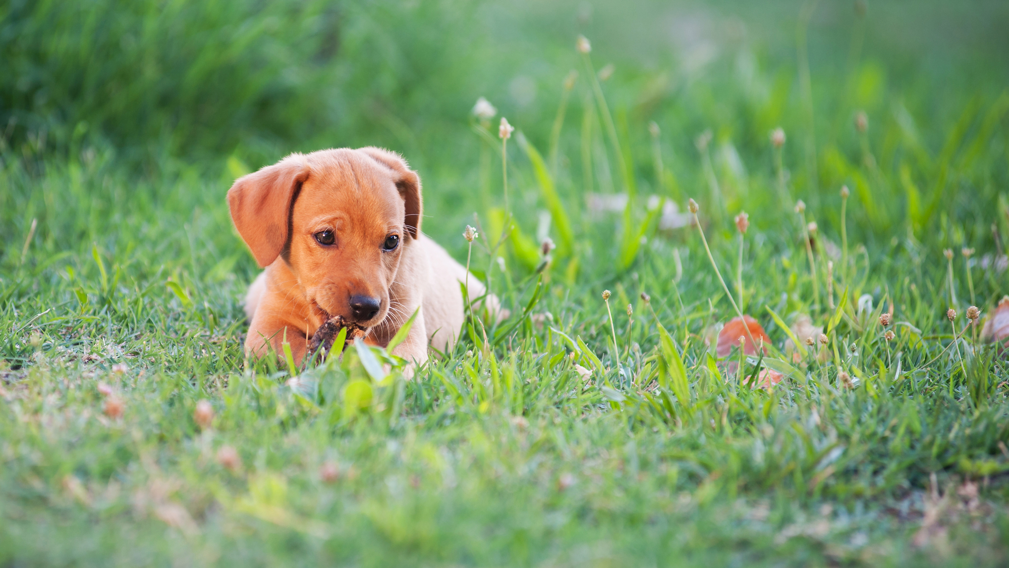 What Are Hookworms & How Do They Impact Pet Health? - Oak