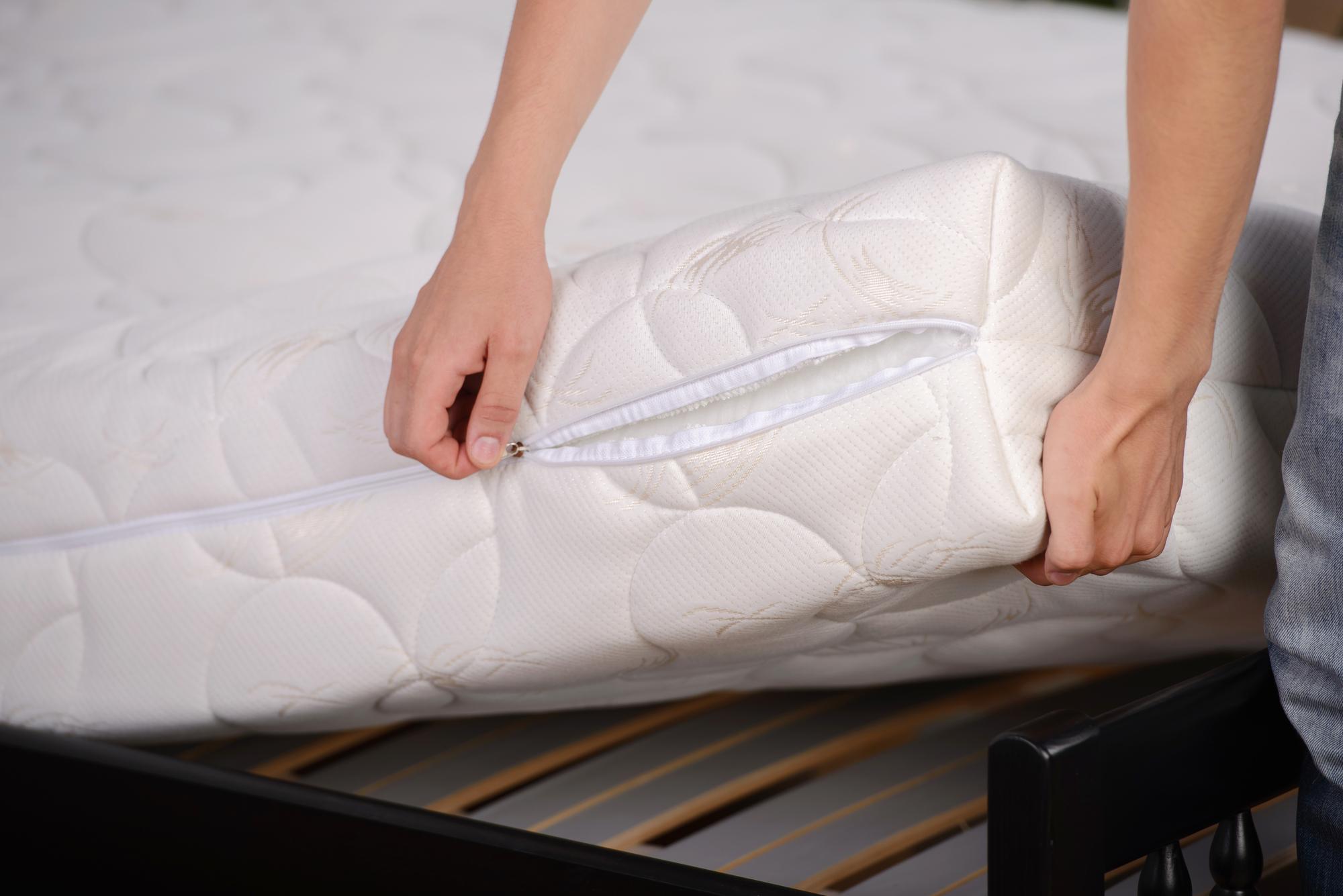 bedbug removal