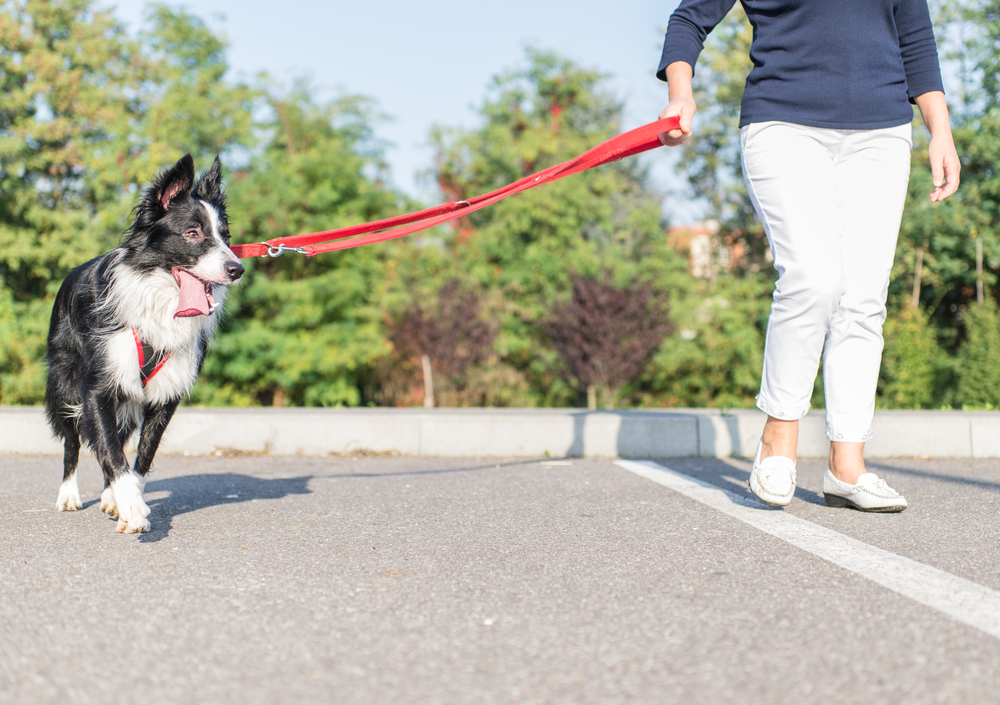 3 Useful Tips To Help Your Dog Overcome Separation Anxiety