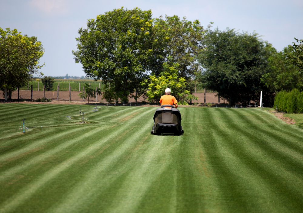 Lawn mowing 101 how often should you cut your grass for How often should you mow your lawn