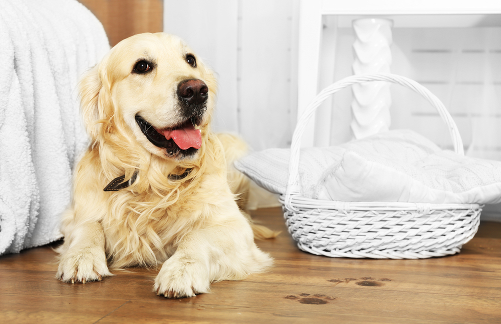 how to get rid of paw prints off hardwood floors