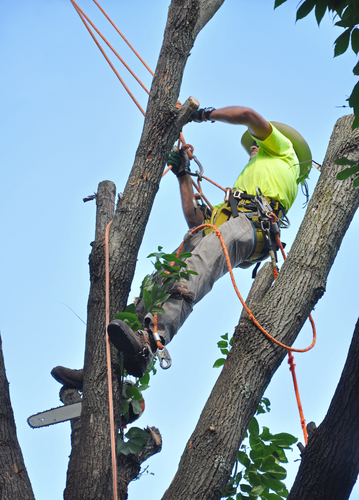 The dangers of diy tree removal sherwoods tree service honolulu tree removal honolulu hi solutioingenieria Gallery