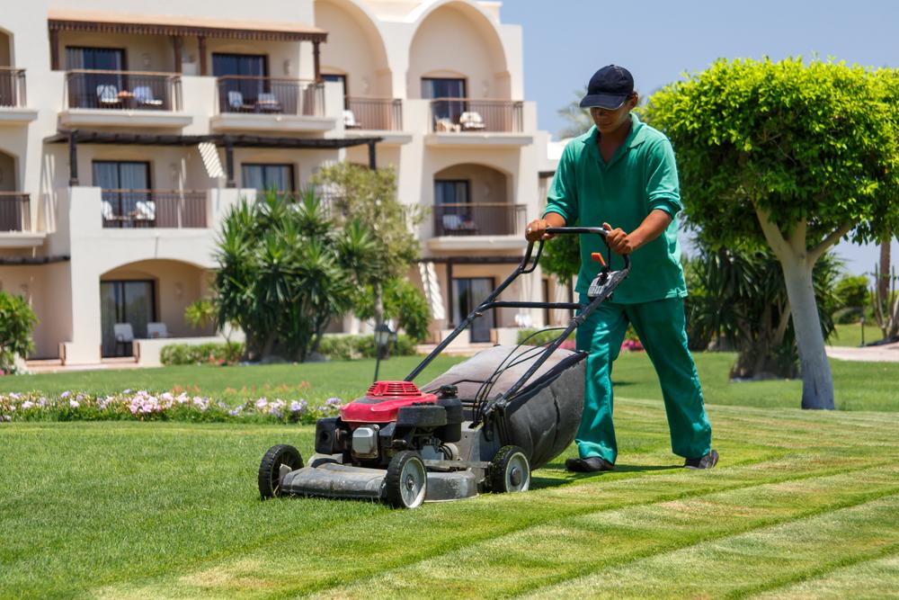 3 Reasons to Get a Professional Lawn Treatment - Custom Lawns Inc ...