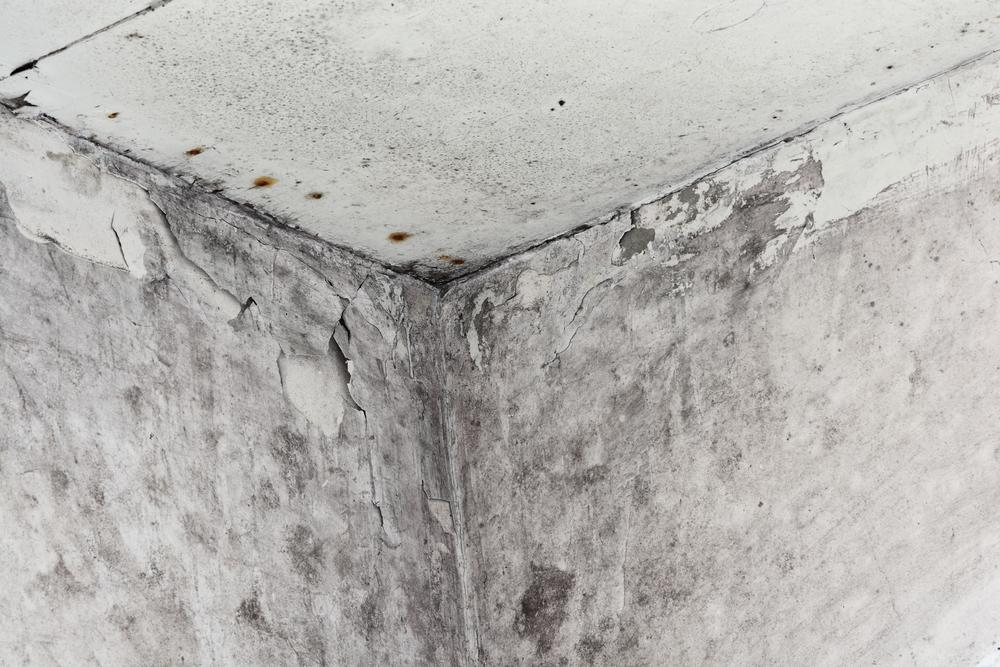 a quick guide to black mold serclean inc richmond hill nearsay. Black Bedroom Furniture Sets. Home Design Ideas