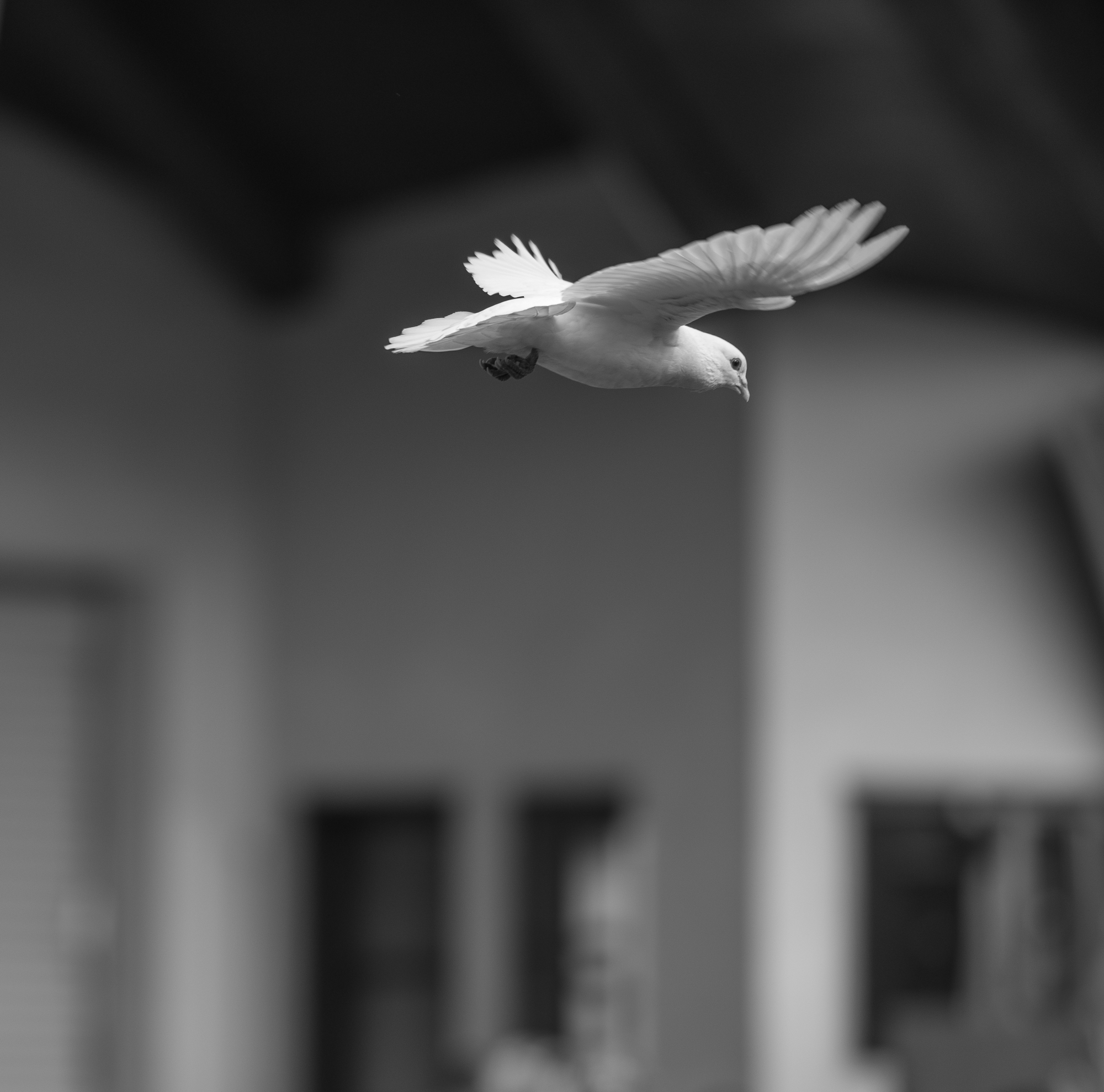 Everything You Need To Know About A White Dove Release A Sign Of