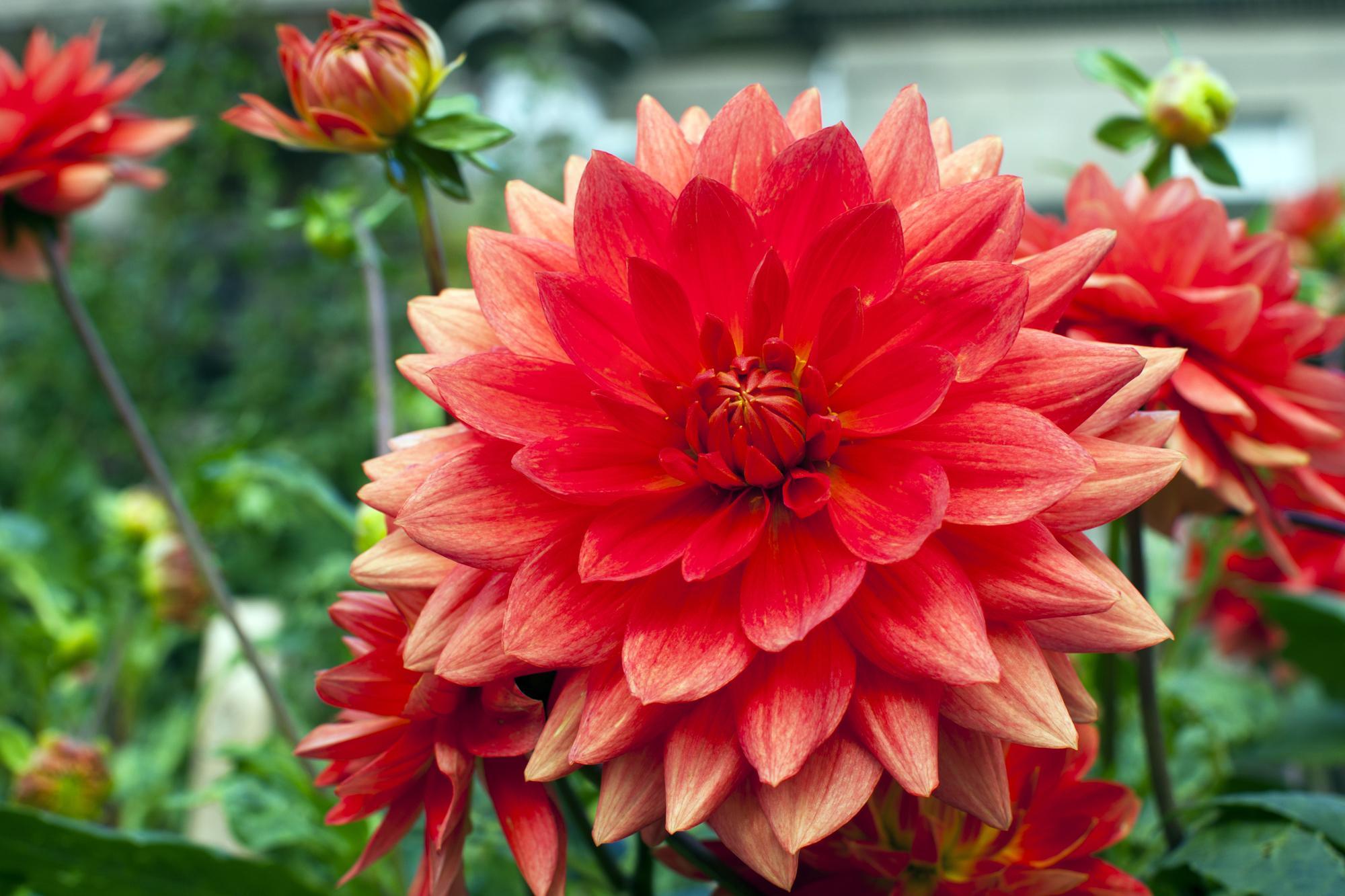 Enterprise-Alabama-flowers