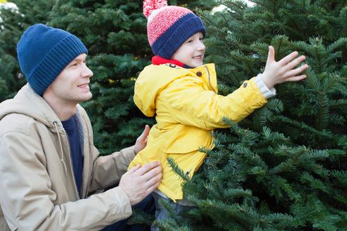 tree Plymouth MN