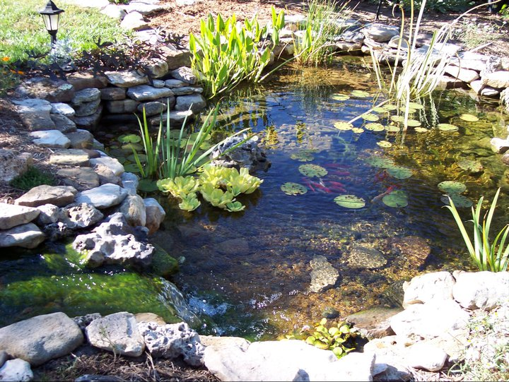 Your spring guide to caring for your koi pond specialty for Salt in koi pond