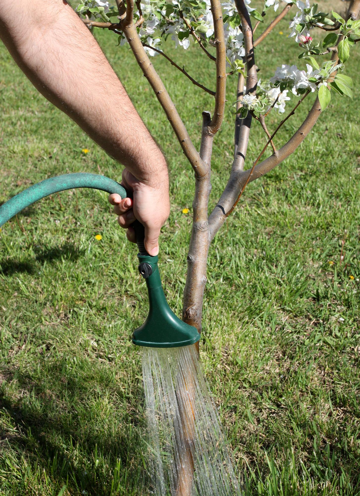 tree care Lincoln NE