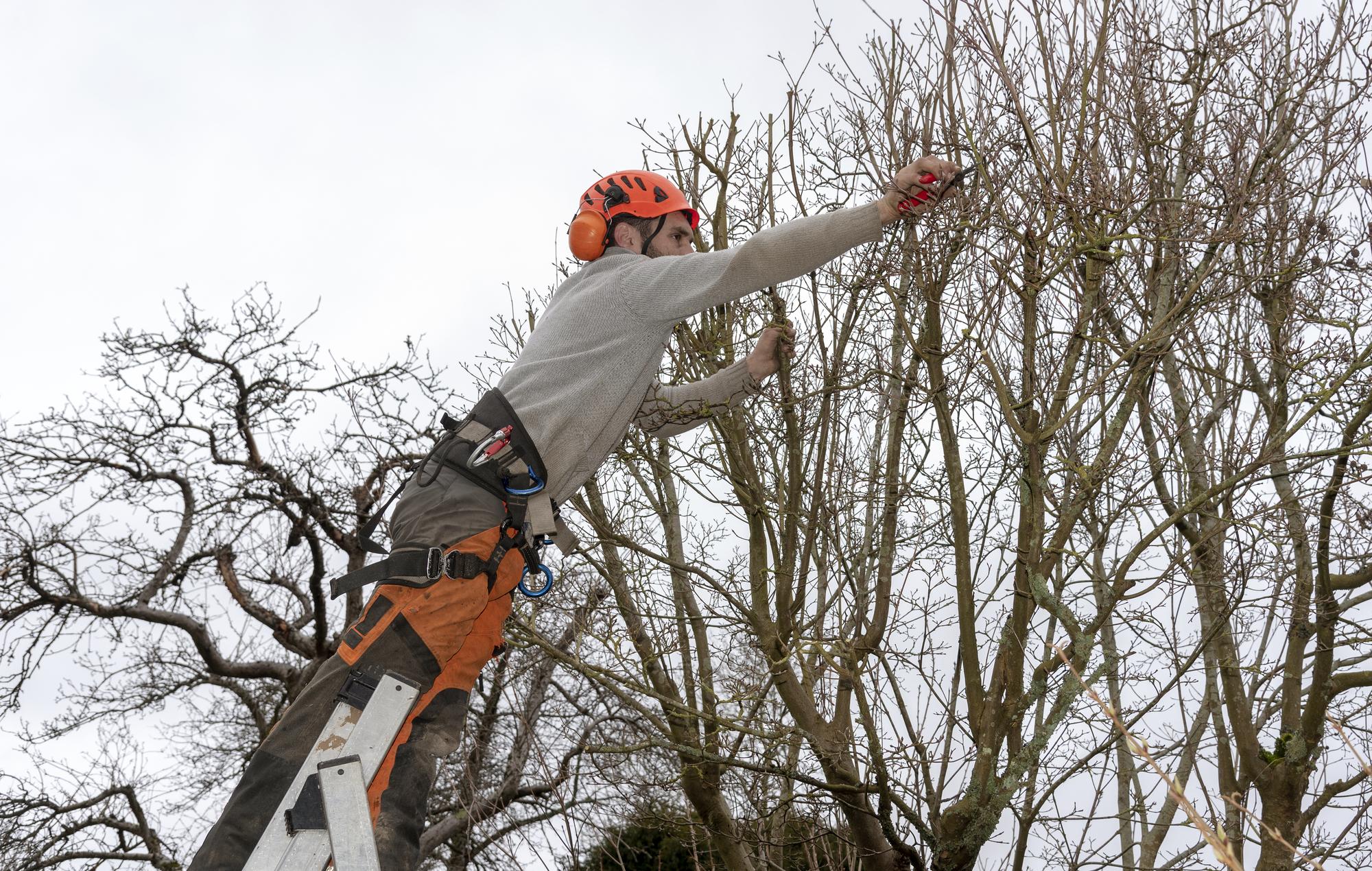 Emergency Tree Serice