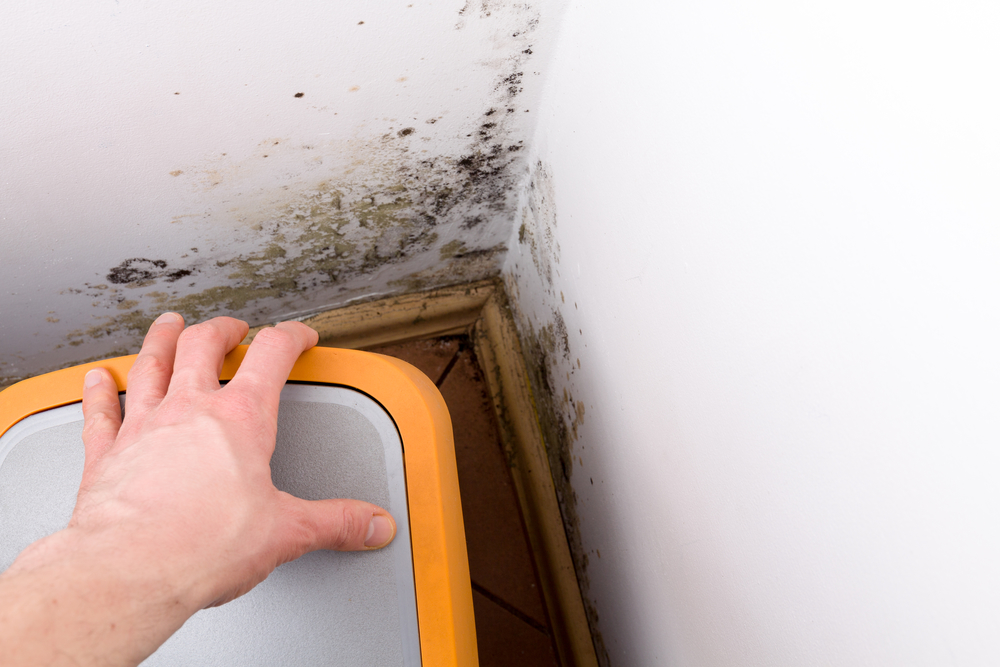 Mold Contact With Can Cause