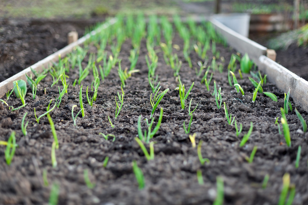 Your guide to understanding screened unscreened topsoil for Screened soil