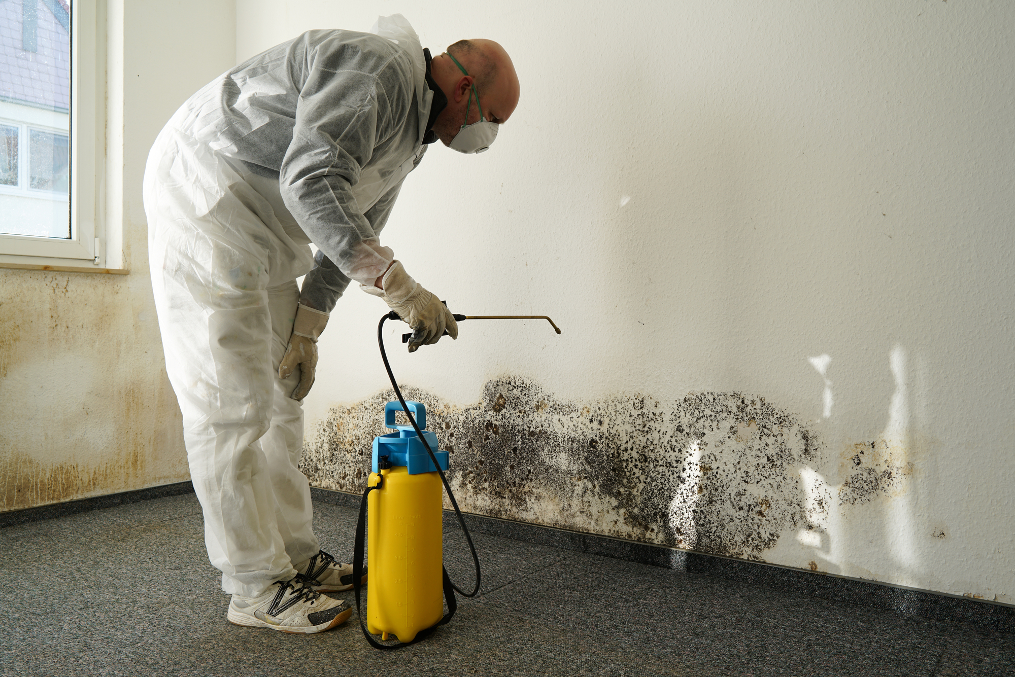 Martinsburg West Virginia Professional Mold Removal