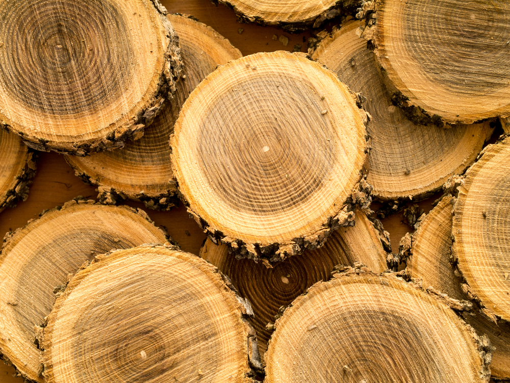 Veneer Logs 3 Ways To Tell If You Re Using Suitable