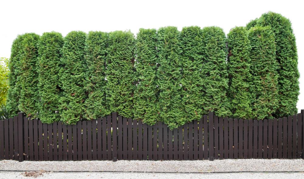 how to break bushes in autonauts