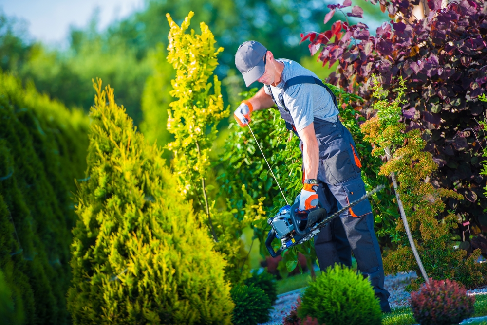 The Facts About What A Professional Landscaper Can Do For ...