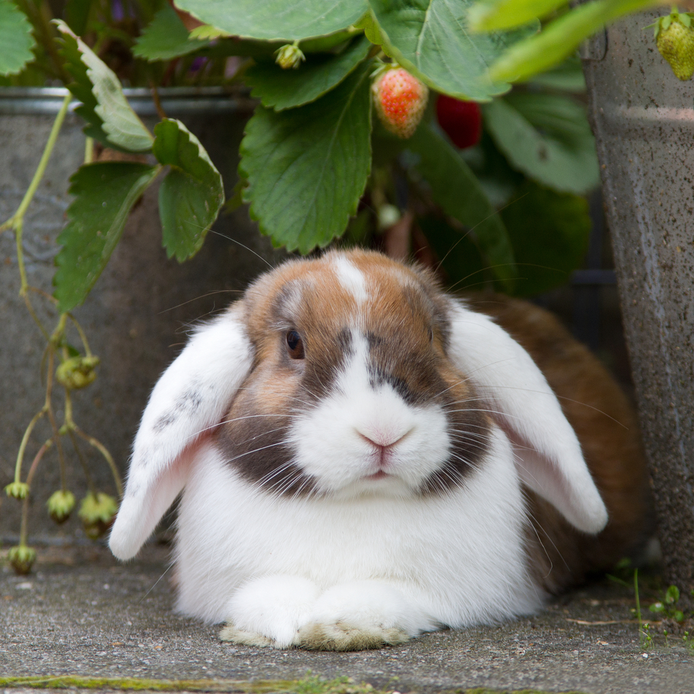 5 myths amp misconceptions about rabbit care   the pet
