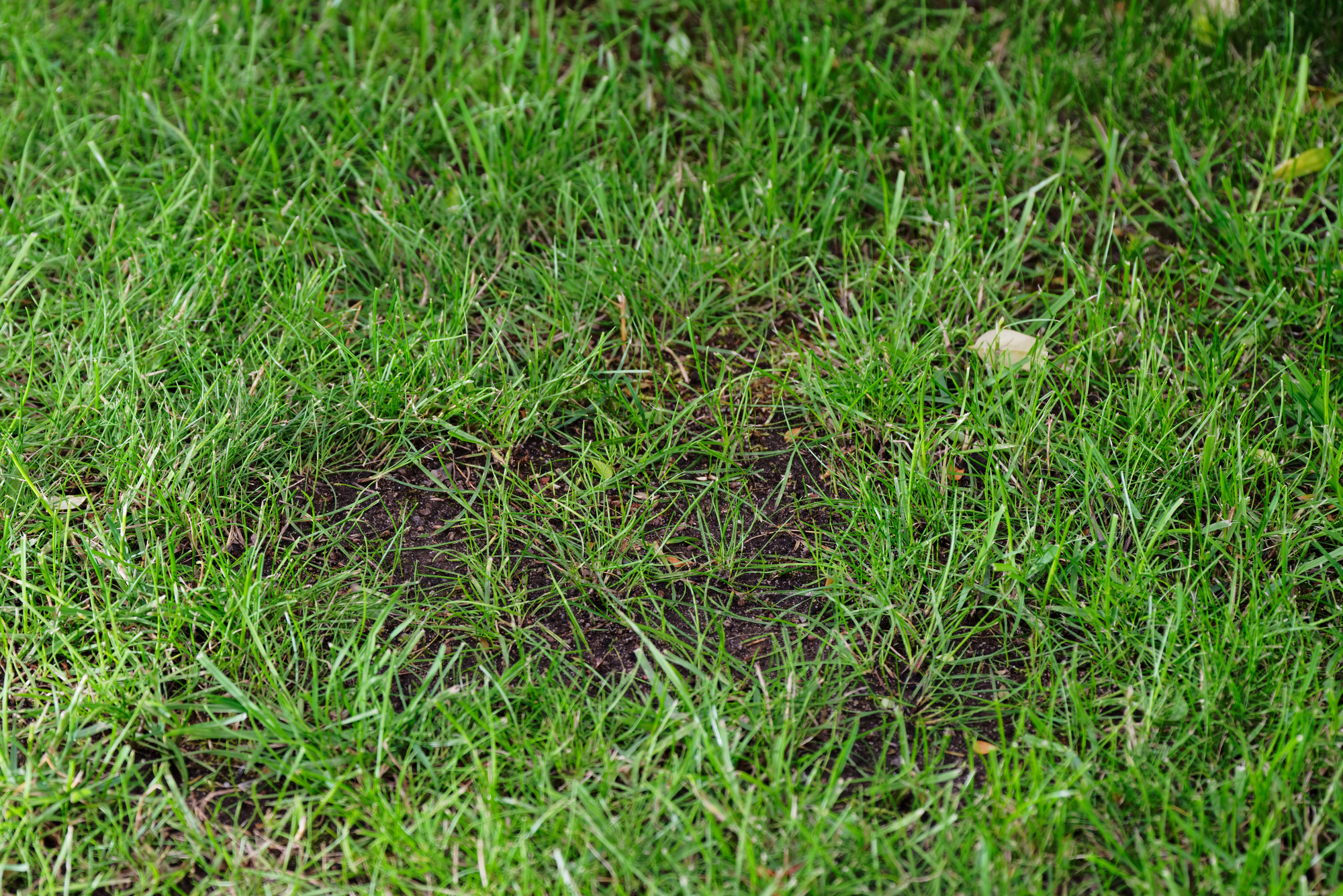 5 Signs Your Home Needs A New Lawn Haloa Hydroseed Koolaupoko