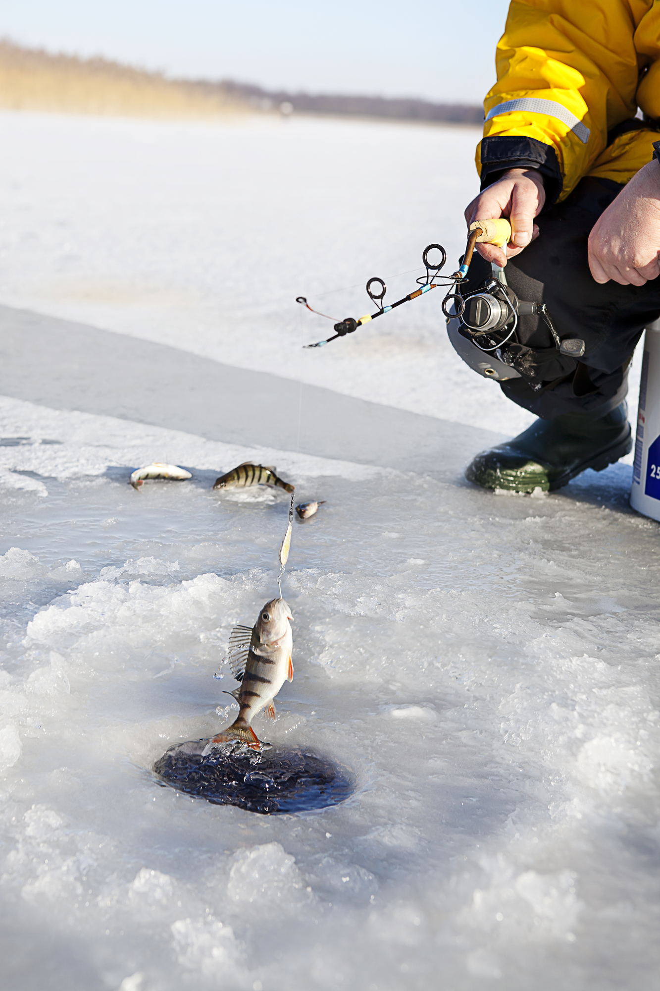 Anchorage, AK Alaskan seafood