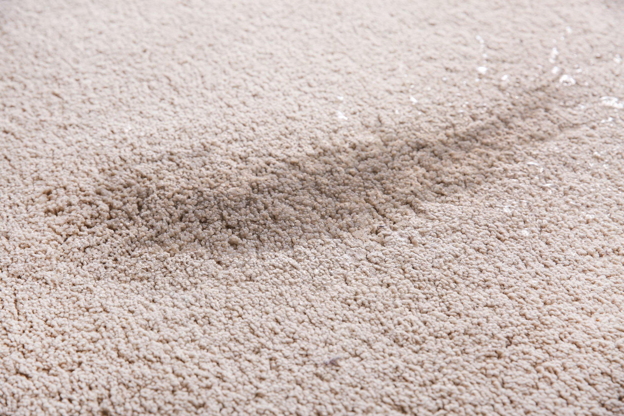 4 Signs You Need Carpet Cleaning for Mold - Polar Carpet Cleaning ...