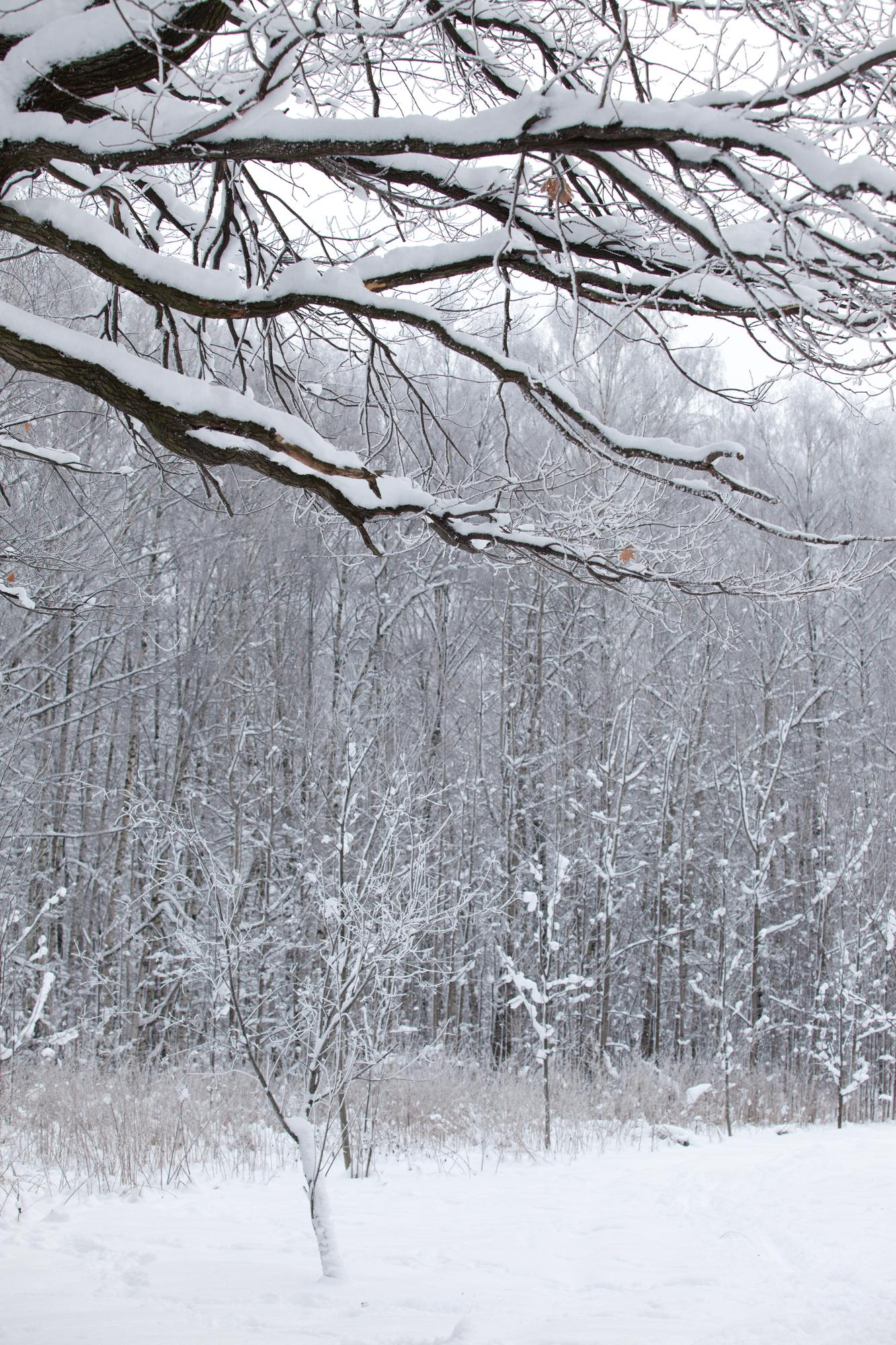 Anchorage, AK tree care