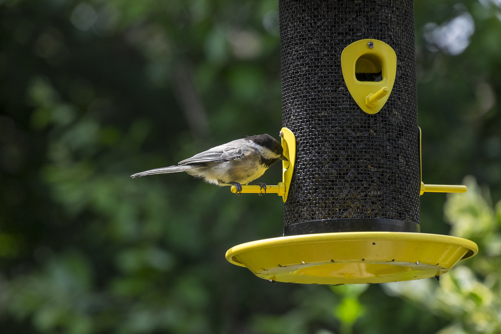 Animal Control How To Keep Pests Out Of Your Bird Feeders